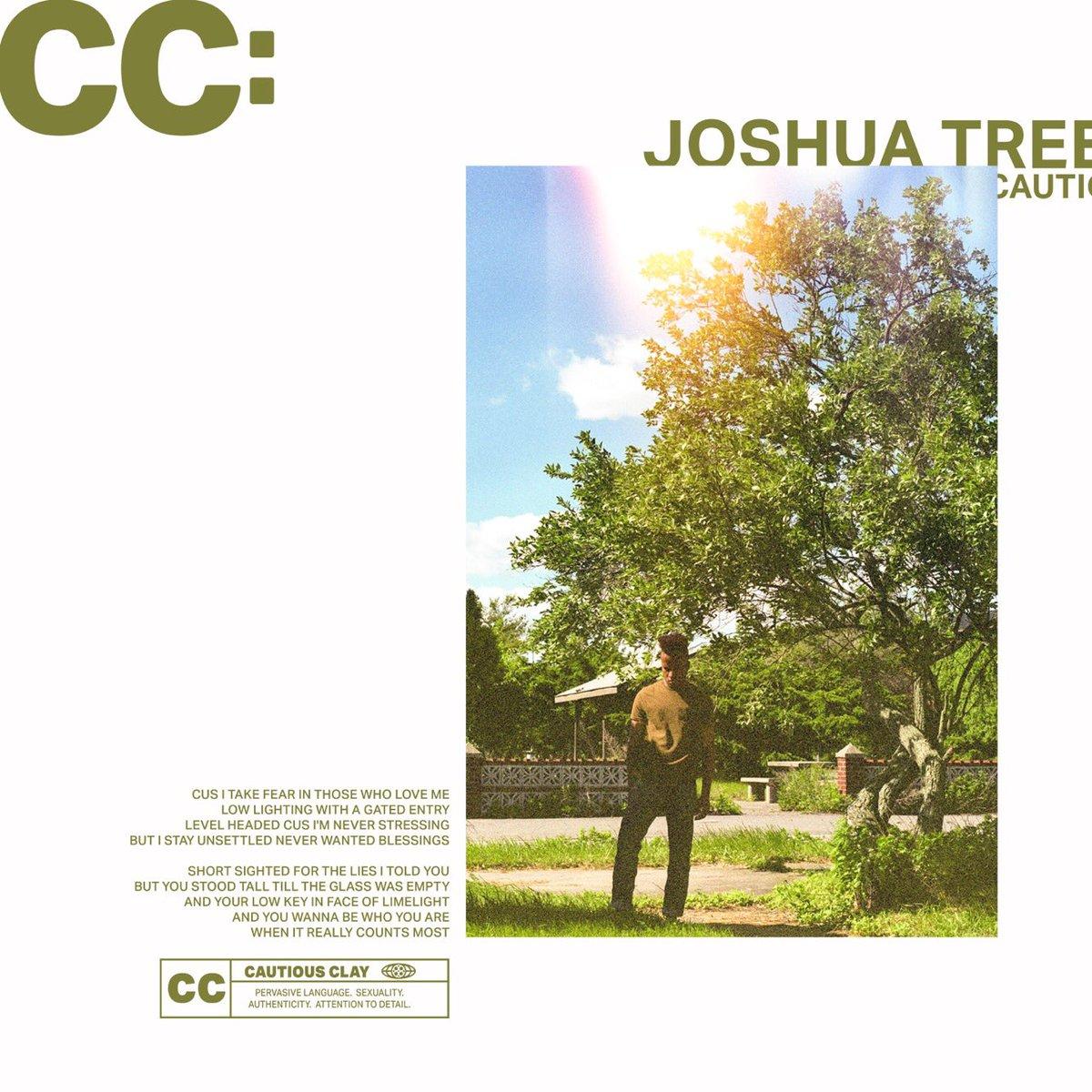 Cautious Clay joshua tree